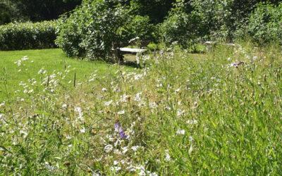 Syötävä puutarha | Pohjois-Kymen Kasvun hankkeita: Osa 3